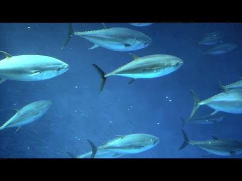 Solomon Islands: Saving the Pacific's Tuna