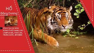 Bảo vệ động vật hoang dã Việt Nam