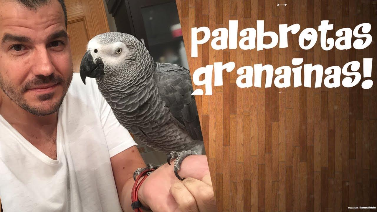 Download Loro Yaco dice PALABROTAS GRANAINAS 2ª PARTE ¡¡ y MUCHO MAS¡