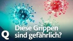 Grippe-Check: Schweinegrippe, Vogelgrippe und saisonale Grippe im Vergleich | Quarks