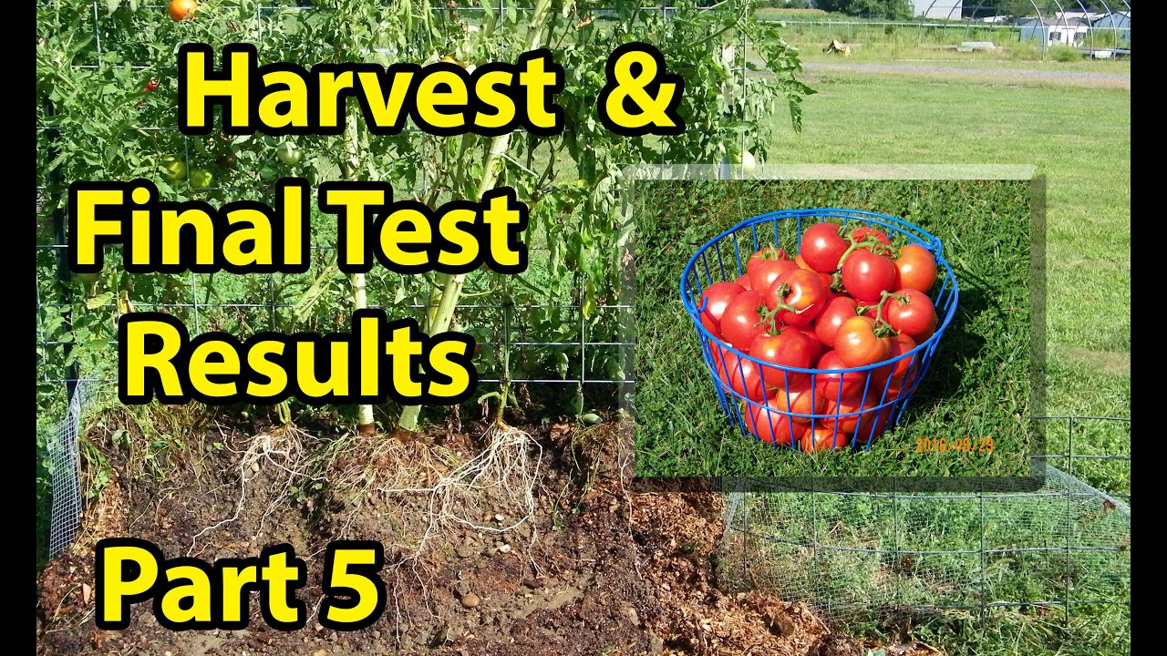 What is the best soil for tomatoes - Free Best Garden Soil Improvement Mix Raised Bed Gardening 101 Vegetable Tomatoes Part 5