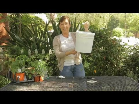 How To Build Your Own Upside Down Tomato Plant : Garden Space