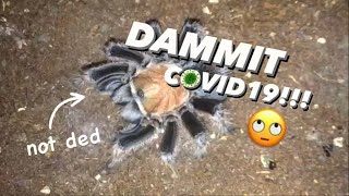 i Bought EXPENSIVE Tarantulas but BECAUSE of COVID ...