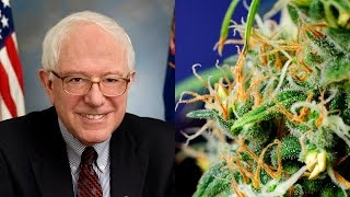 Bernie Sanders Introduces Bill To End Marijuana Prohibition
