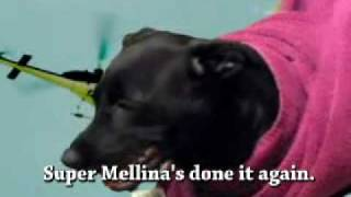 my poor dog (super Mellina)