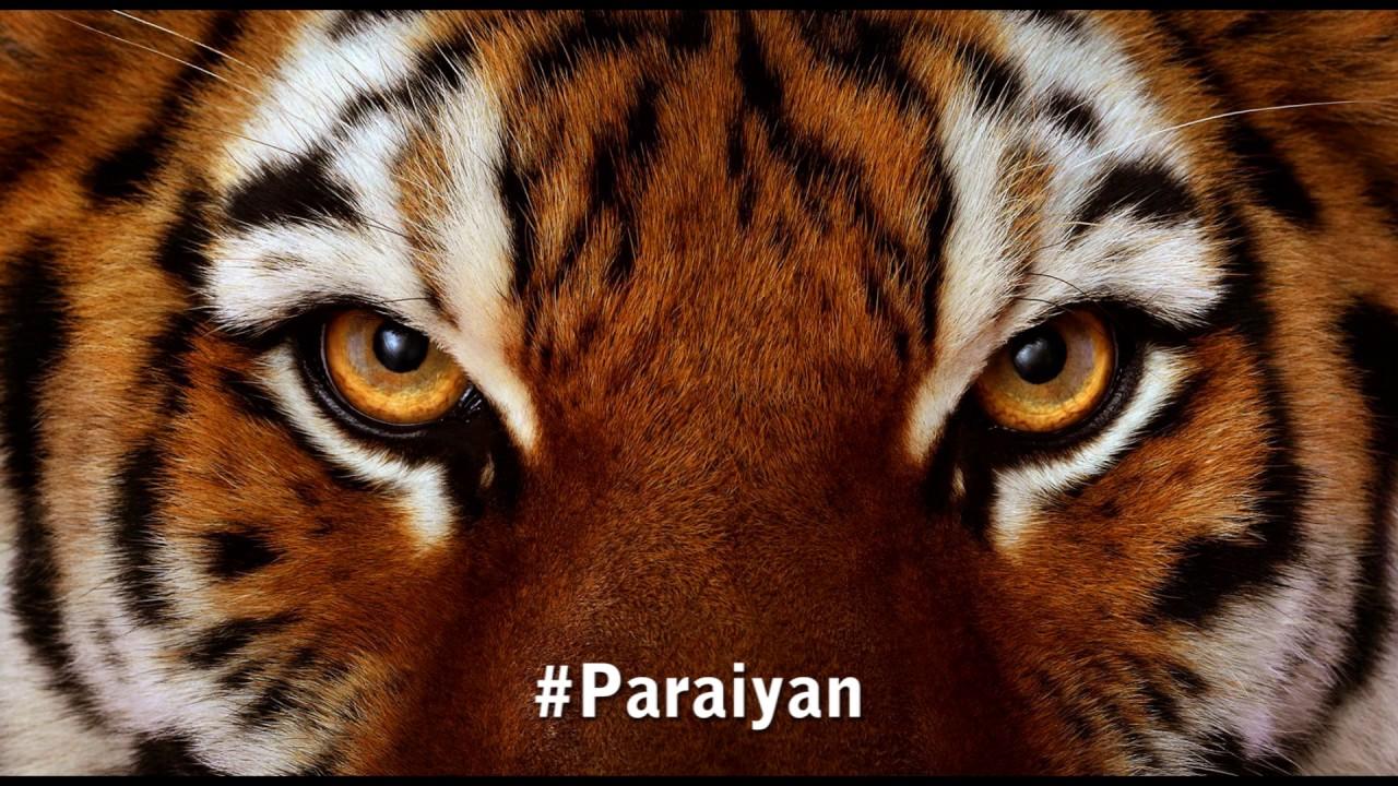 Playlist of பறையன் | Mass of Paraiyan | Melodlist | Online