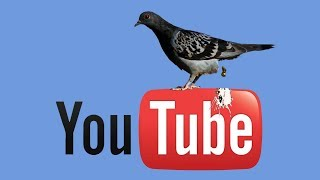 1st EVER YouTuber Restricted Is A Pigeon Whisperer