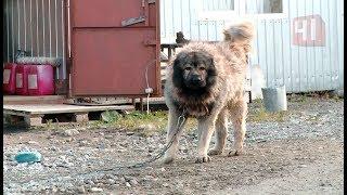 Дикая собака укусила за мужское достоинство / Новости