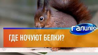 Галилео | Белки 🐿 [Squirrels]