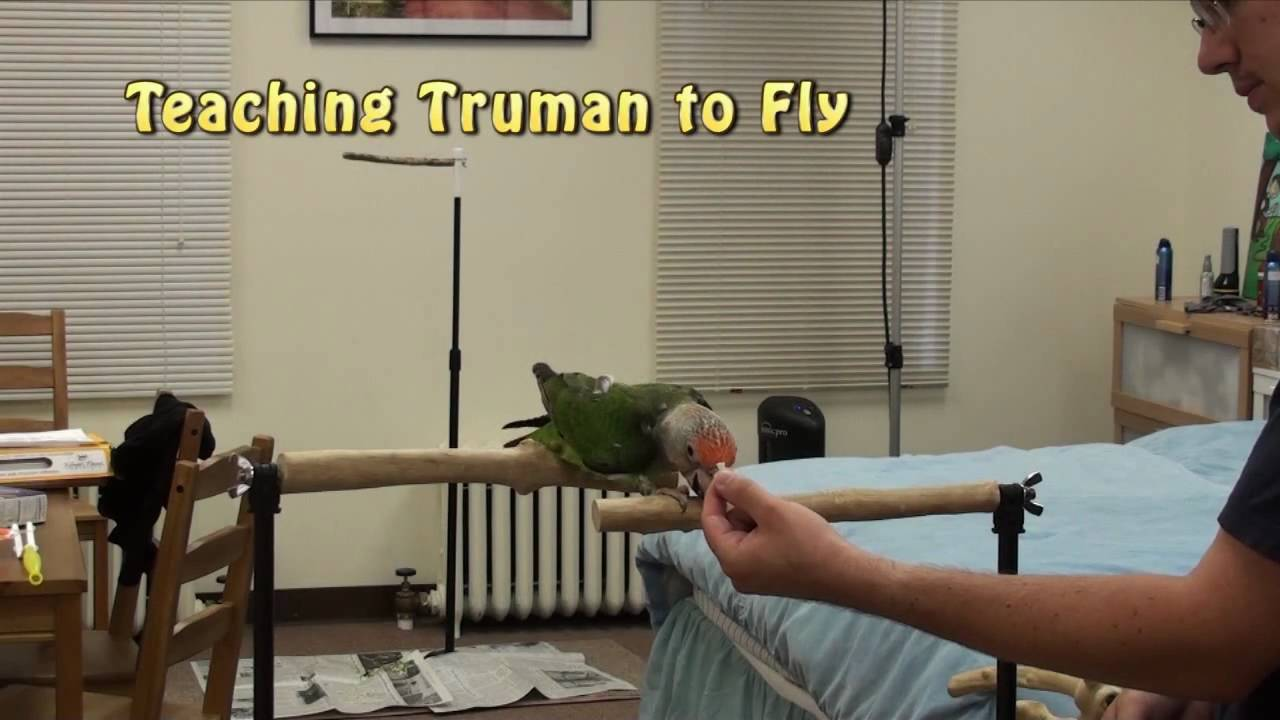 how to teach parrot to speak