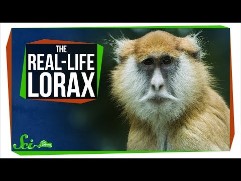 Turns Out 'The Lorax' Is Probably a Real Monkey