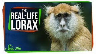 "Turns Out ""The Lorax"" Is Probably a Real Monkey"