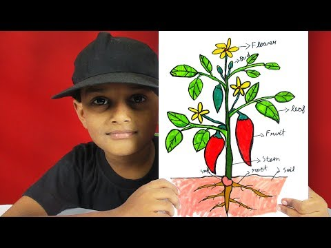 How To Draw Different Parts Of A Plant For Kids | Cartoon Plant Drawing | GO School TV