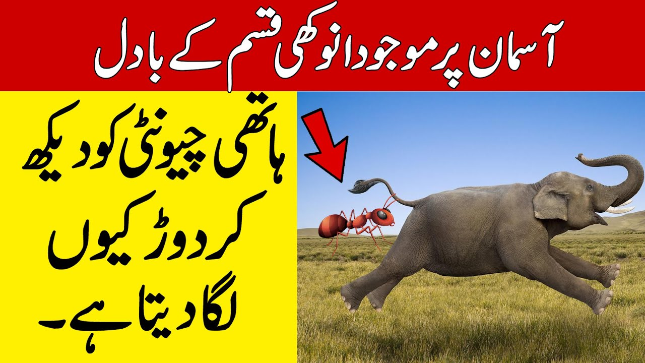 Why Is An Elephant Scared To See An Ant | #Tag