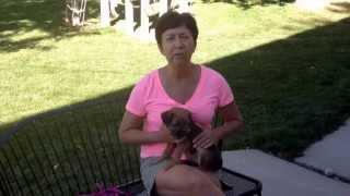 Tips On Beginning Puppy Training