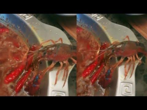 Viral Video Lobster Melarikan Diri Dari Panci  Sup Mendidih saat Dimasak, Akhirnya  Dipelihara Mp3