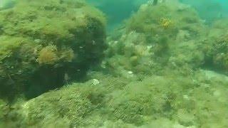 plongée Martinique 2016