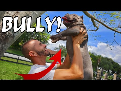HOW to DEAL WITH A BULLY!