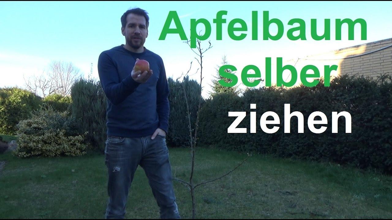 apfelbaum selber ziehen apfel aus samen vermehren apfelkern zum keimen bringen youtube