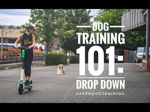 Dog Training 101: Drop Downs