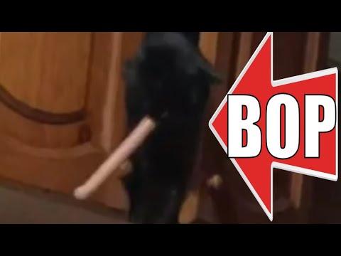 Кот ворует сосиску смешные животные / Cat steals sausage funny animals