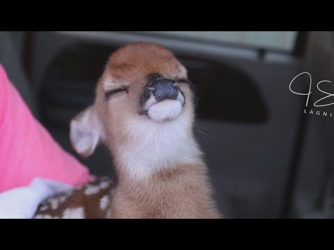 Days Old Fawn Poses With Perfect Smile After Flood Water Rescue