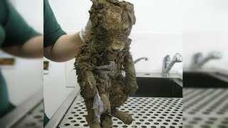 A Mysterious Animal Found In Mud Couldn't Be Identified Until They Cleaned Him !
