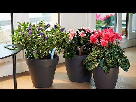 parrot flower power wireless indoor outdoor bluetooth smart plant sensor with free dedicated. Black Bedroom Furniture Sets. Home Design Ideas