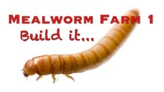 Mealworm Farm 1 - (Build It)