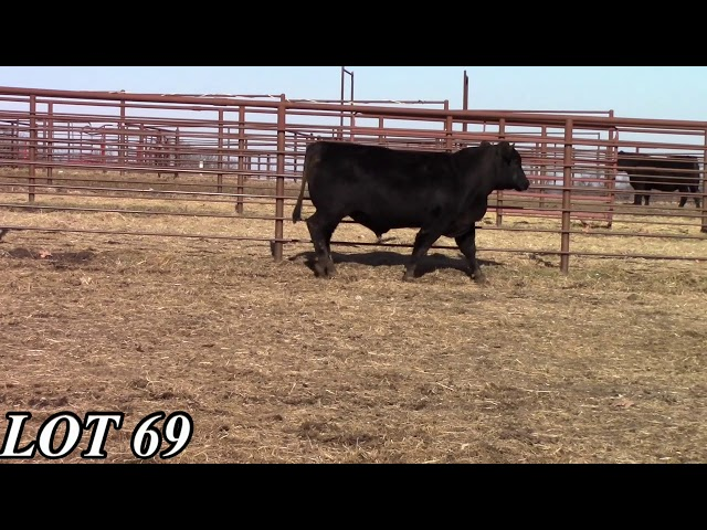 Mead Angus Farms Lot 69