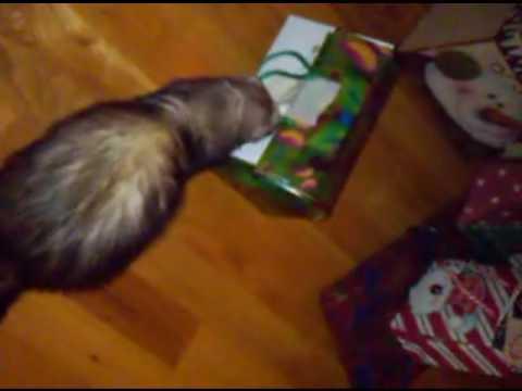 Funny ferret Christmas.