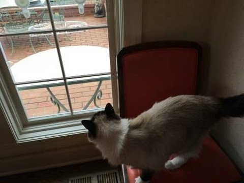 Window Bird Feeder for Cats: WooPet Bird Feeder Product Arrival and Installation Video - Floppycats