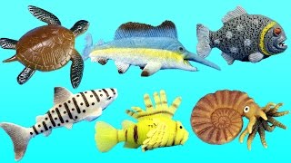 Wild Animal Educational Toys Collection LEARNING SEA ANIMALS Names Videos For Kids