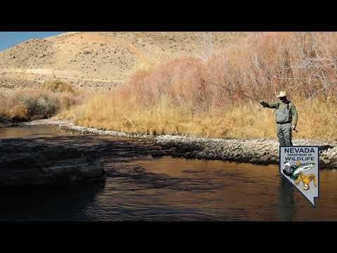 Fall Fishing Report Western Nevada