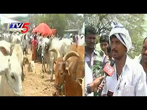 Palamuru Drought Hits Animals | Farmers Selling Cattle To Sl