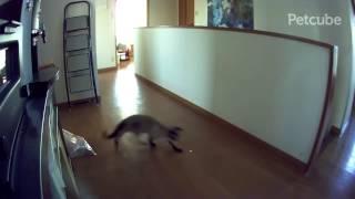 [本日の一品]「Petcube」でネコと遊んでみた - ケータイ Watch thumbnail