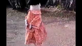 Nevjerojatan pas hoda u haljinici na dvije noge