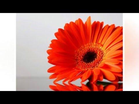 Самые красивые цветы для рабочего стола.The Most Beautiful Flowers For Your Desktop