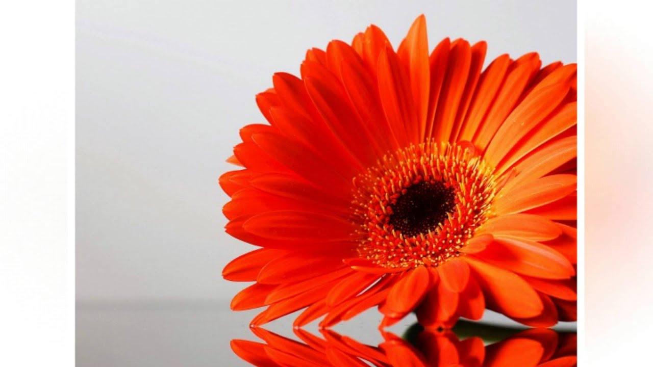 Обои корзина, красивые, цветок, полевые, садовые, цветы на рабочий ...   720x1280