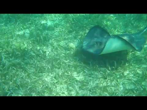Shark Ray Alley, Hol Chan Marine Reserve - Ambergris Caye, Belize