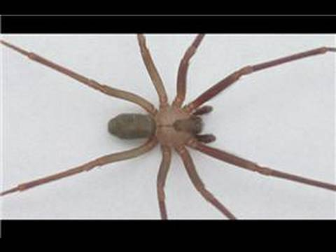 Spiders in the United States : Identifying Spiders of the Midwest