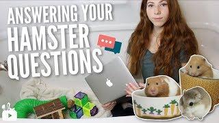 ANSWERING YOUR HAMSTER QUESTIONS...in the bathtub 🐹