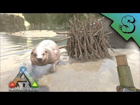 Beaver Dams - Locations & Tips for Looting | Ark: Survival Evolved [E2]