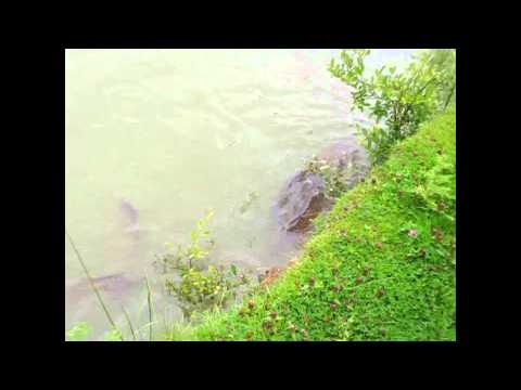 LAKESIDE FISHERY, CUBLINGTON, BUCKINGHAMSHIRE