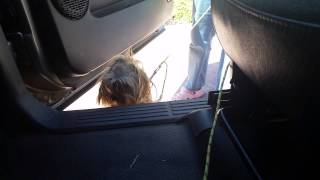 Dog Training San Jose Get Your Dog To Jump Into Your Car