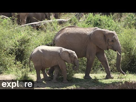 African Animal Lookout  Camera powered by Explore.org