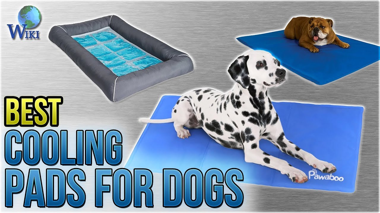 10 Best Cooling Pads For Dogs 2018 Youtube