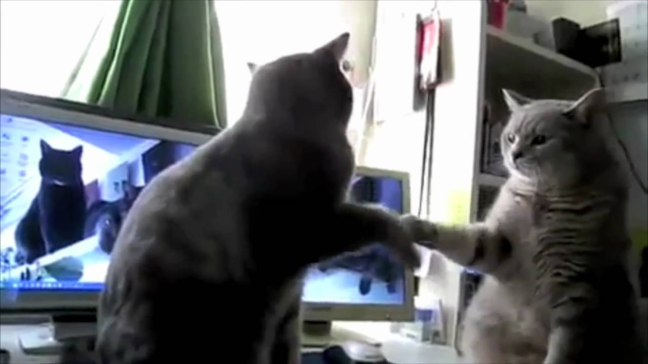 Kitties Playing Patty Cake