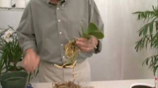 Hydroponics for Orchids Part 2
