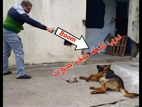 كيف تدرب كلبك على التظاهر بالموت بخطوات بسيطة
